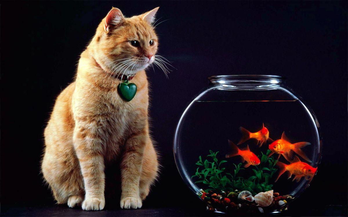 Photo cat aquarium fish - free pictures on Fonwall
