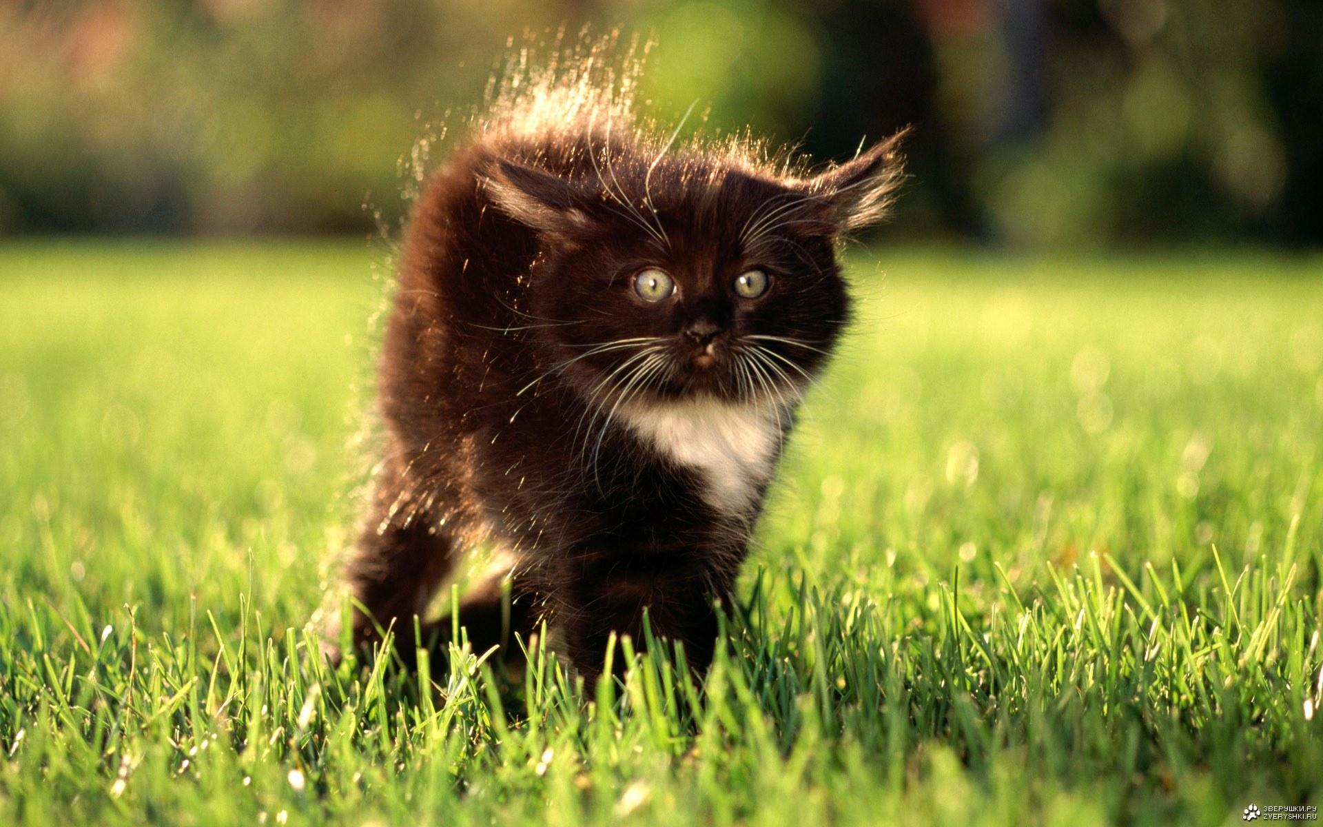 Обои кот, котенок, шерсть, черный