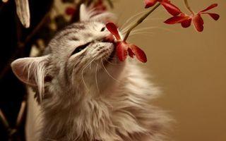 Фото бесплатно кот, пушистый, шерсть, уши, нос, цветок, усы, лапы, кошки, ситуации