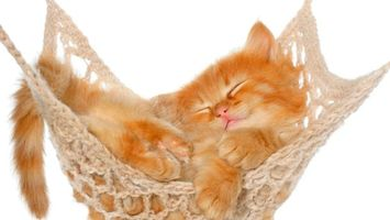Бесплатные фото котёнок,гамак,сон,кошки