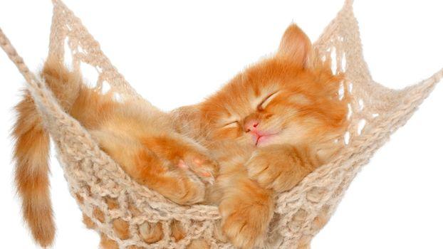 Фото бесплатно котёнок, гамак, сон