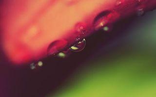 Бесплатные фото листик,растение,капли,роса,вода,жидкость,макро
