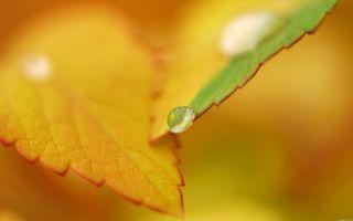 Фото бесплатно листья, листок, растение, осень, желтые, роса, вода, капли, макро, природа