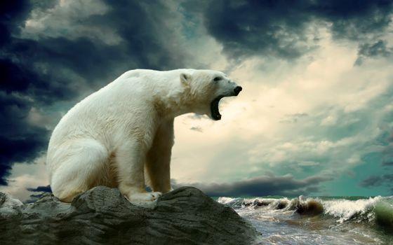 Белый медведь рычит на берегу океана