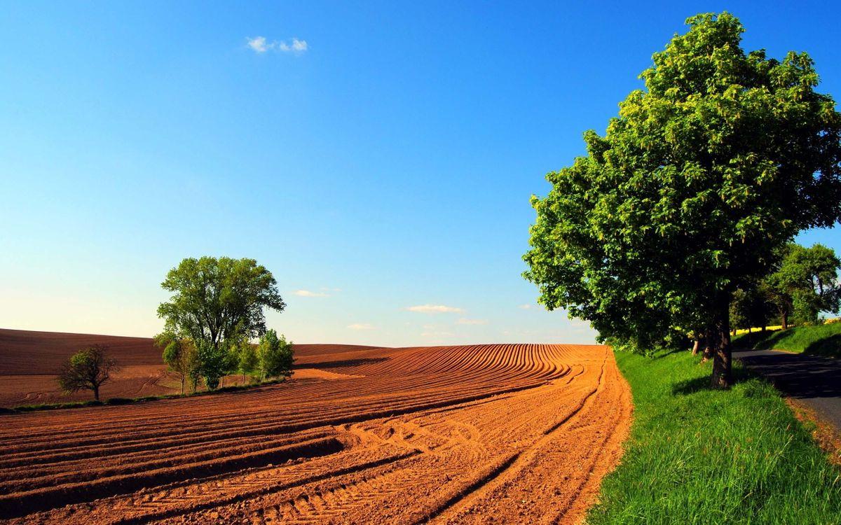 Обои небо, облака, горизонт, поле, деревья, огород, земля, трава, пейзажи на телефон | картинки пейзажи