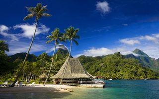 Фото бесплатно небо, облака, пальмы