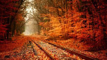 Фото бесплатно осень, листопад, листья, железная, дорога, лес, природа