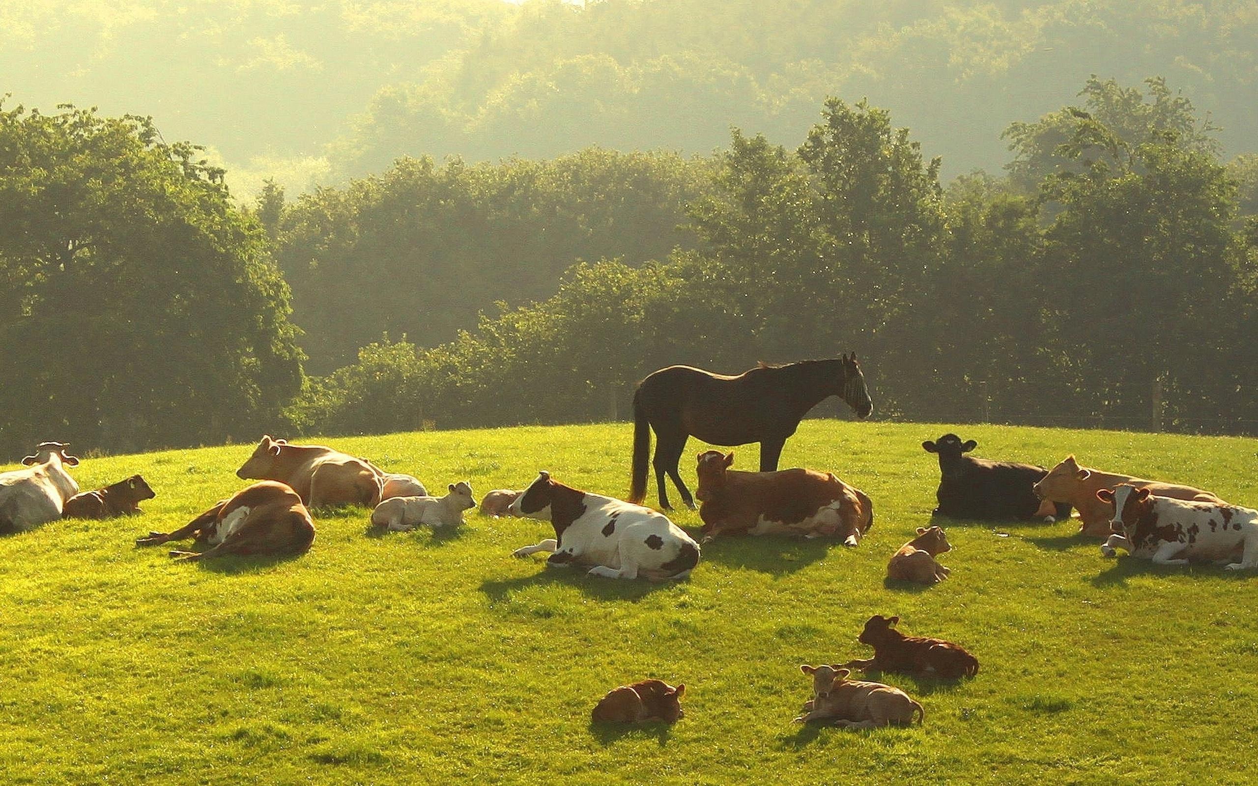 Пастбище лошадей без смс