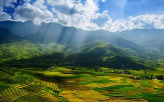 Photo free fields, greenery, rays