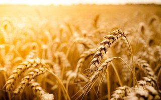 Фото бесплатно рожь, овес, урожай, поле, лето, тепло, колоски, природа