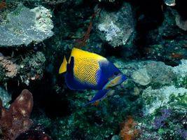 Фото бесплатно рыба, цветная, плавники
