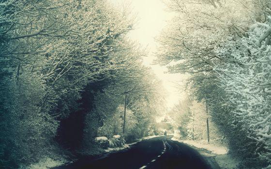 Бесплатные фото дорога,зимняя,асфальт,деревья,в снегу,утро,природа