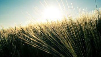 Фото бесплатно трава, лучи, солнца