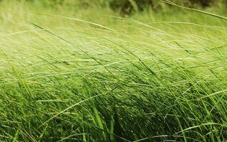 трава, зелень, лето, поле, ветер