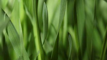 Фото бесплатно трава, зеленая, клумба