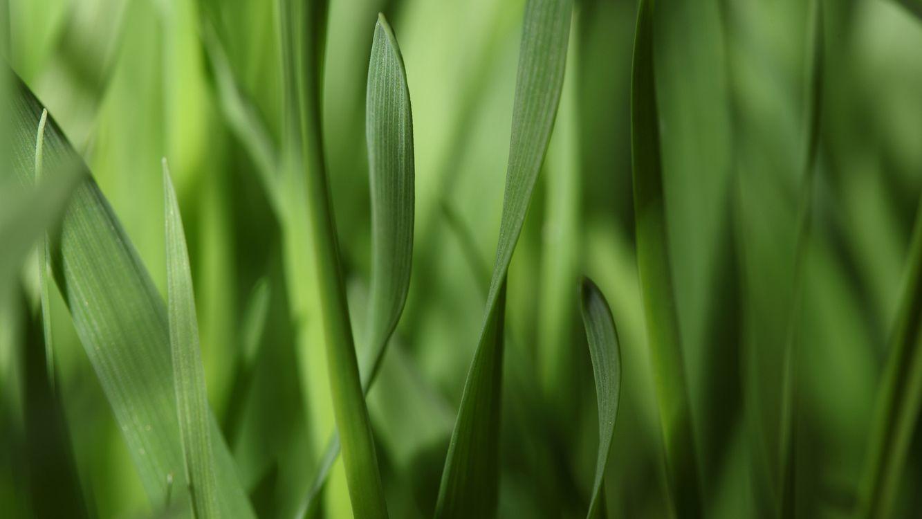 Фото бесплатно трава, зеленая, клумба, фон, поле, лето, тепло, жара, природа, природа