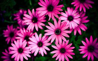 Фото бесплатно цветы, красота, розовые