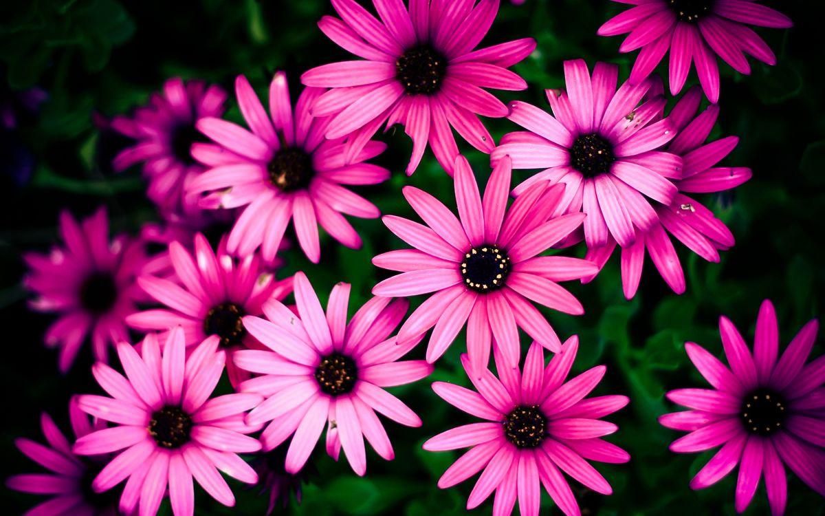 Фото бесплатно цветы, красота, розовые - на рабочий стол