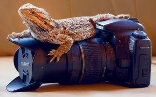 Бесплатные фото варан,хищник,зверь,лапы,глаза,рот,кожа