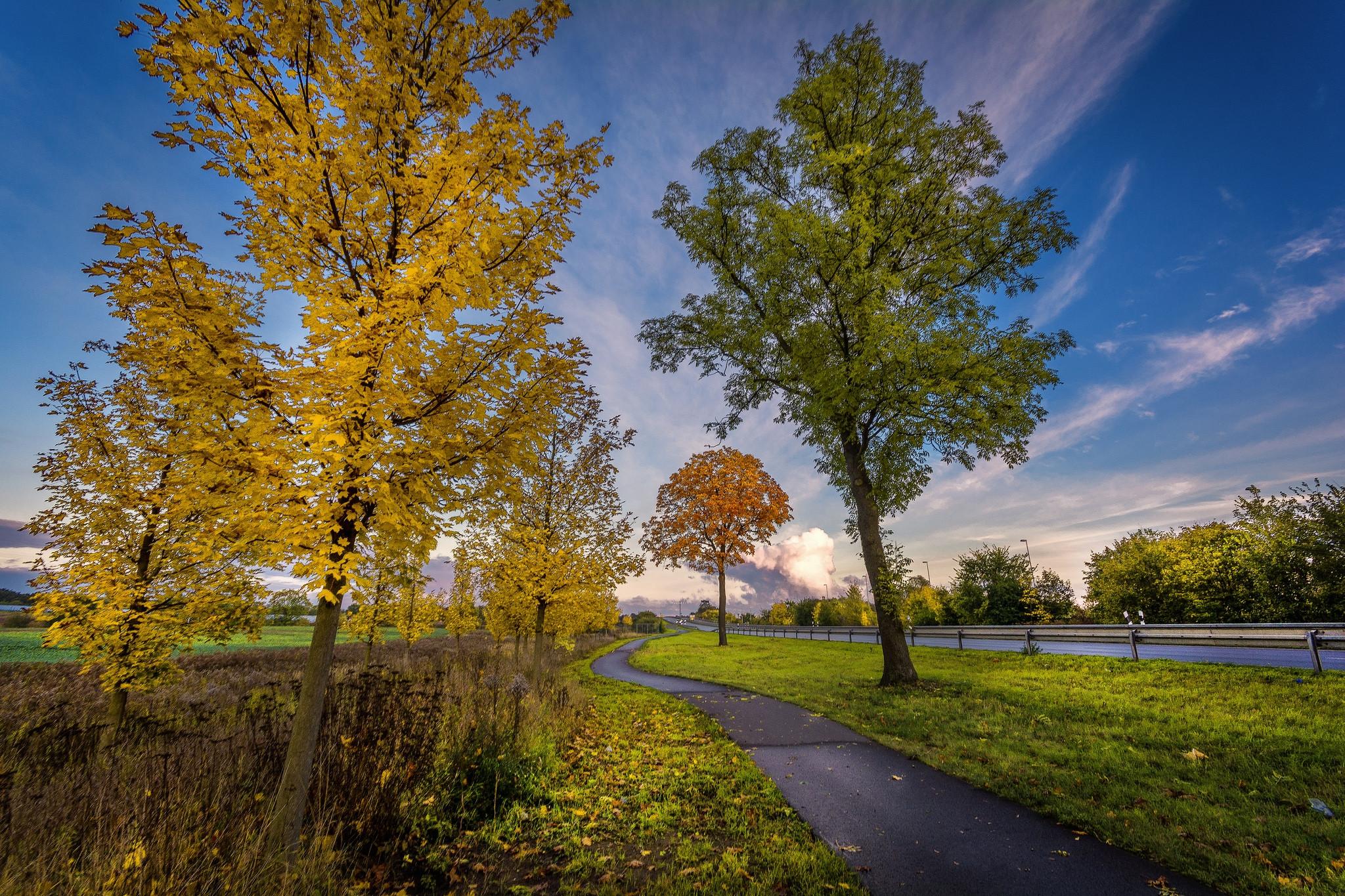 обои закат, осень, дорога, деревья картинки фото