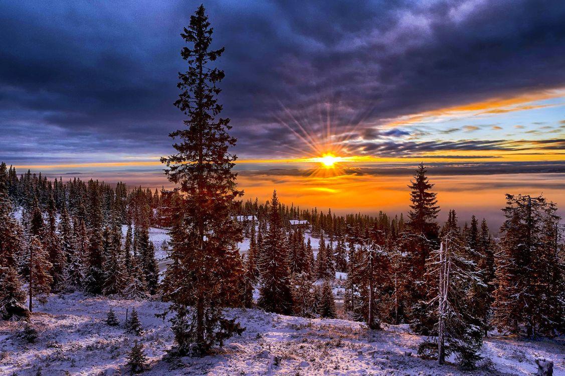 Фото бесплатно зима, лес, солнце, пейзажи, пейзажи