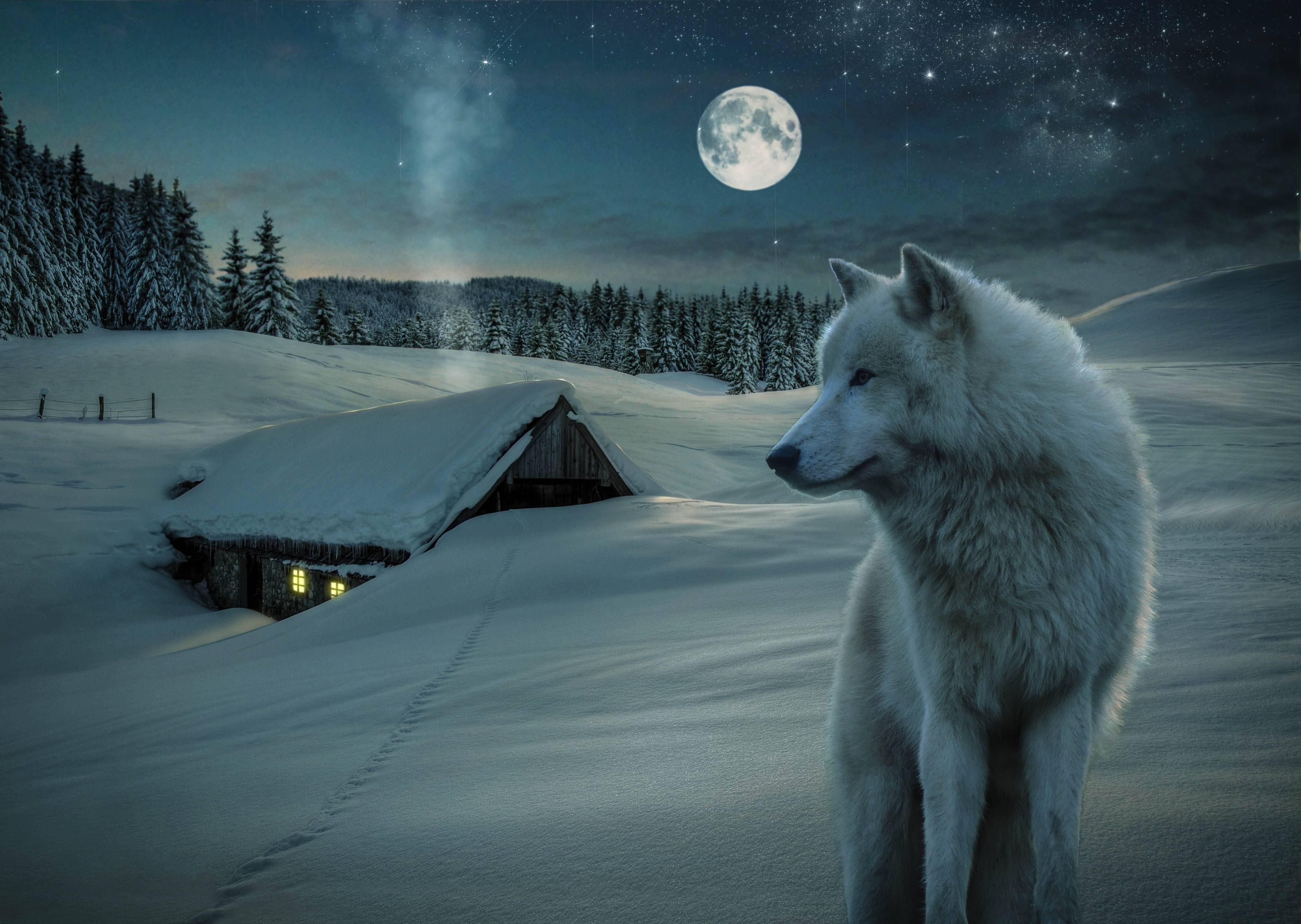 Луна волк картинки