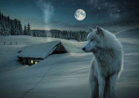 Бесплатные фото 3D,little house,snow,wolf,moon,night,зима