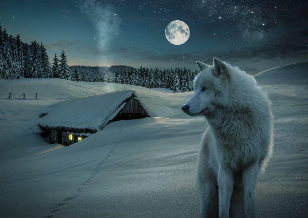 Фото бесплатно 3D, little house, snow, wolf, moon, night, зима, луна, дом, волк, деревья, природа, рендеринг