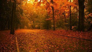 Бесплатные фото листопад, осень, деревья, лес, лесная дорога, фанари, природа