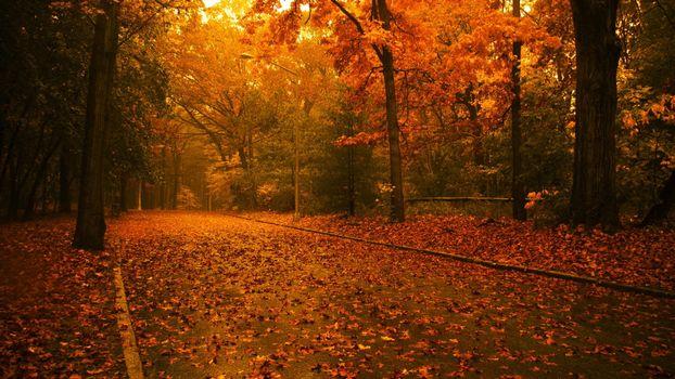 Фото бесплатно падают листья, фонарь, осень