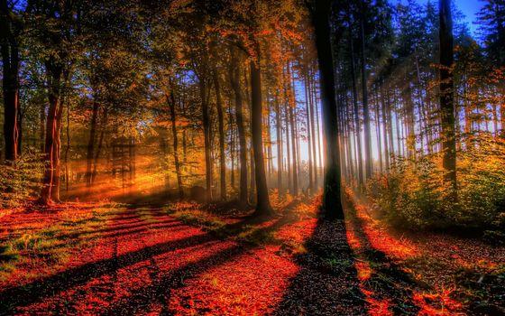 Фото бесплатно лес, закат, осень