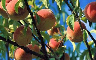 Заставки абрикосы, зелень, фрукты