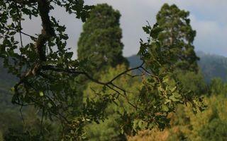 Фото бесплатно деревья, ветки, листья, трава, небо, заставка, природа