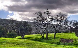 Бесплатные фото деревья,кора,стволы,гора,трава,лужайка,поле