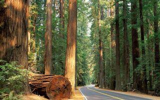 Фото бесплатно дорога, лес, деревья, сосны, асфальт, природа