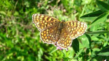 Бесплатные фото природа,насикомые,насекомые,разное