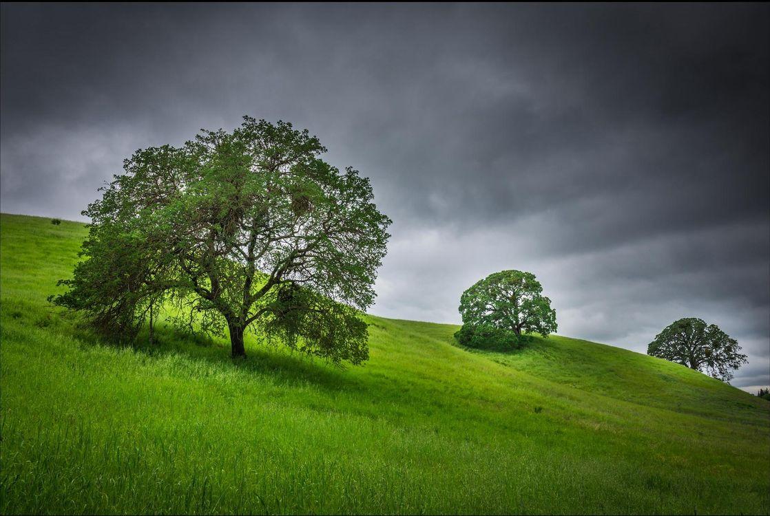 Фото бесплатно холмы, тучи, деревья - на рабочий стол