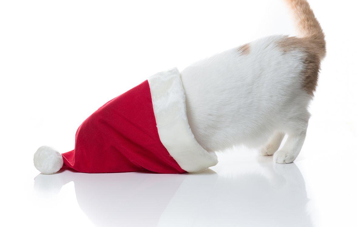 Фото бесплатно кот, шапка, хвост, лапы, шерсть, порода, пятно, красная, бумбон, рыжий, белый, отражение, полосатый, пушистый, кошки, праздники