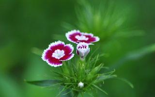 Фото бесплатно лепестки, зелень, листья