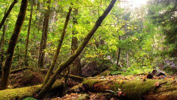 Фото бесплатно лес, листья, солнце