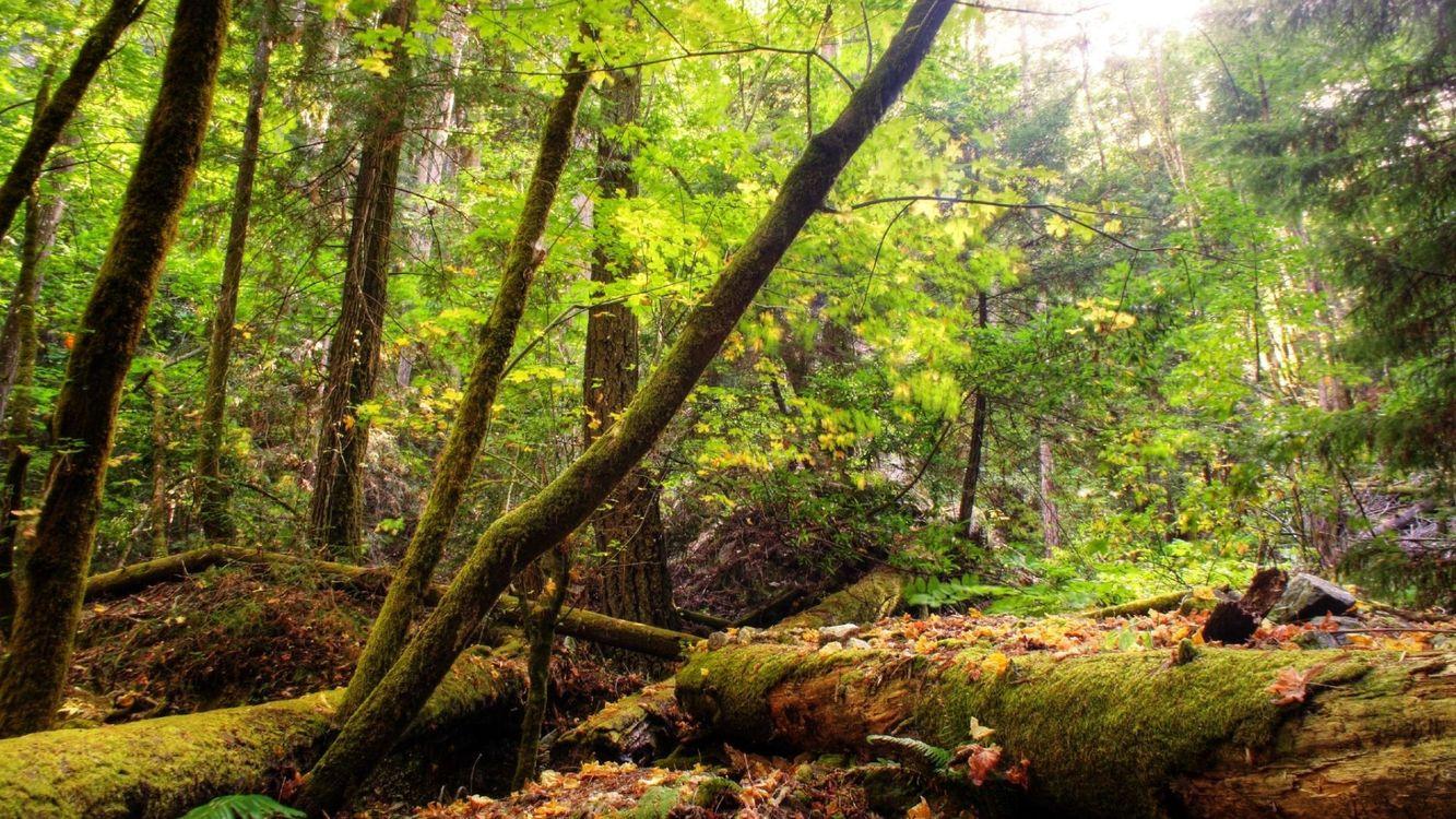 Фото бесплатно лес, листья, солнце - на рабочий стол