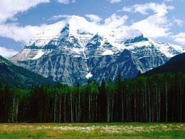 Бесплатные фото лес,деревья,поле,трава,цветы,горы,снег