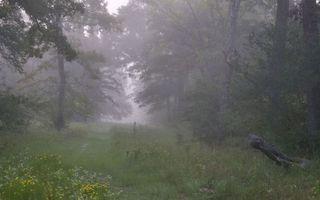 Заставки лес,деревья,тропа,трава,туман,лето,природа