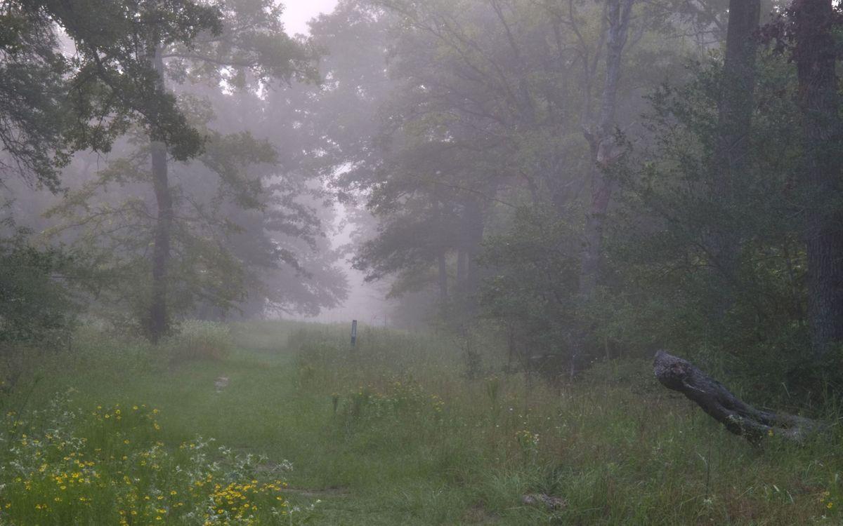 Фото бесплатно лес, деревья, тропа, трава, туман, лето, природа, природа