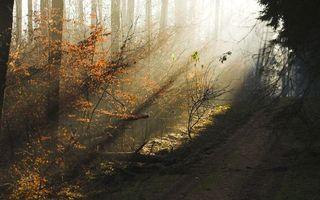 Бесплатные фото лес,деревья,ветки,листья,трава,крона,кора