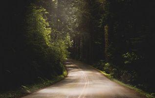 Фото бесплатно лесная дорога, темный лес, лучи солнца