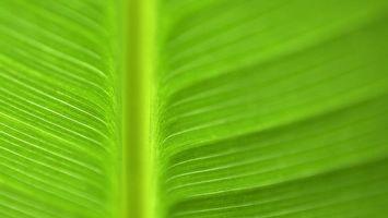 Обои лист, зеленый, большой, яркий, красивы, близко, природа