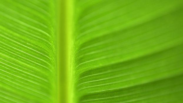 Фото бесплатно лист, зеленый, большой