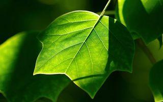 Фото бесплатно листья, дерево, ветка