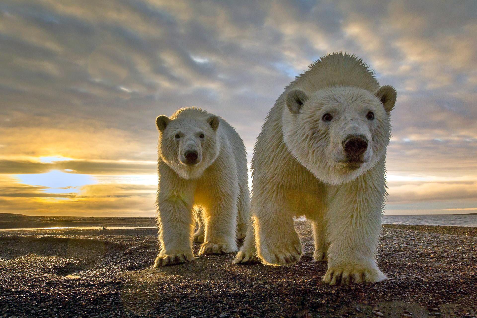 море, закат, медведи
